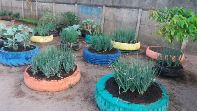 Horta Sustentável